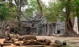 Ta prohm吴哥窟柬埔寨 免版税库存图片