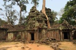 Ta Prohm (坟茔入侵者寺庙),吴哥窟,柬埔寨 库存照片