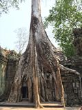 Ta Prohm (坟茔入侵者寺庙),吴哥窟,柬埔寨 免版税库存图片