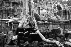 Ta Prohm Photos stock