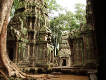 Ta prohm 2 Stock Photos