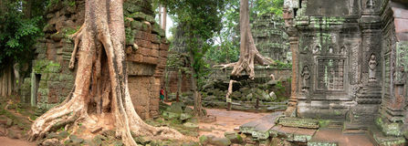 Ta Prohm Stock Image