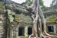 Ta Prohm Royalty Free Stock Photo