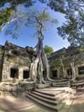 Ta Prohm. Jungle overtakes the ancient temple Ta Prohm near Siem Reap, Cambodia Stock Images
