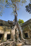 Ta Prohm Royalty Free Stock Photography