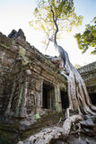 Ta Prohm Royaltyfria Bilder