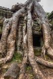 古老废墟和树根, Ta Prohm寺庙,吴哥,柬埔寨 库存照片