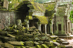 ta prohm Obraz Stock
