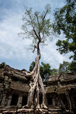 Ta Prohm Fotos de Stock Royalty Free
