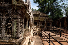 ta prohm Obraz Royalty Free