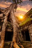Ta Prohm Image stock