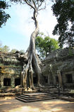 TA PROHM Royalty-vrije Stock Fotografie