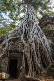 Ta Prohm, ancient khmer Buddhist temple in Siem Reap is known for the trees growing out of the ruins. This temple was stock photography
