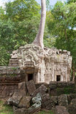 Ta Prohm in Angkor Royalty Free Stock Photos