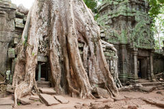 Ta Prohm in Angkor Royalty Free Stock Photos