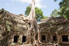 Ta Prohm in Angkor Stock Photo
