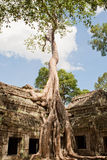 Ta Prohm in Angkor Stock Image