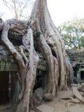 Ta Prohm, Angkor Stock Photography