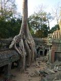 Ta Prohm, Angkor Royalty Free Stock Photos