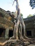 Ta Prohm, Angkor Stock Photo