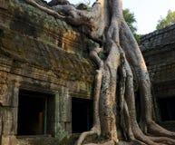 Ta Prohm, Angkor Royalty Free Stock Photo