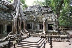TA Prohm Angkor Στοκ φωτογραφία με δικαίωμα ελεύθερης χρήσης