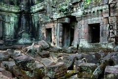 Ta Prohm Angkor Fotografering för Bildbyråer