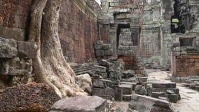 Ta Prohm, Angkor, Cambodia Stock Image