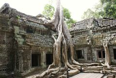 Ta Prohm Angkor Stock Photos