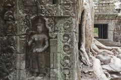 Ta Prohm in Angkor Stock Images