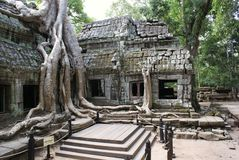 Ta Prohm Angkor Royalty Free Stock Photography