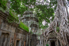 Ta Prohm in Angkor Wat Stock Image