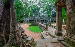 TA Prohm, Angkor Wat Στοκ Εικόνες