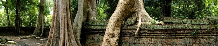 Ta Prohm Angkor Wat Stock Photography