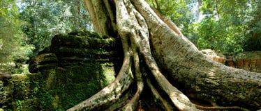 Ta Prohm Angkor Wat Stock Photo