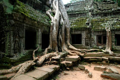 Ta Prohm Angkor Wat. Fig trees engulfing the ancient temple in Cambodia Stock Image