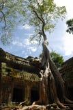 Ta Prohm, Angkor Wat, Cambodge Images libres de droits