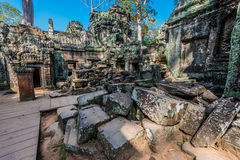 Ta prohm angkor wat cambodia Royalty Free Stock Photo