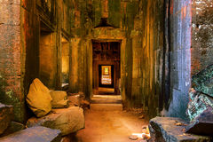 Ta Prohm, Angkor Wat. Royalty Free Stock Photography