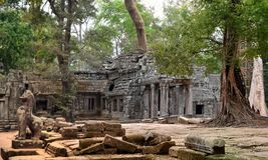 Ta Prohm Angkor Wat Cambodia Royalty Free Stock Image
