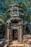 Ta Prohm Angkor Wat Cambodia Stock Images