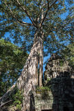 Ta Prohm Architectures Stock Photo
