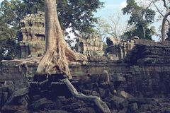 Ta Prohm in Cambodia Stock Photo