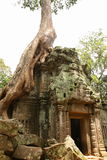 Ta Prohm Stock Photo