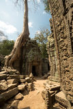 Ta Prohm carvind details with tree. Carving details at right and ruins at left Royalty Free Stock Photos