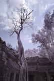 Ta prohm castle siem reap Cambodia Royalty Free Stock Image
