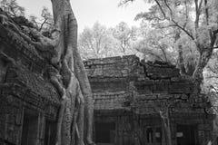 Ta prohm castle siem reap Cambodia Royalty Free Stock Photo