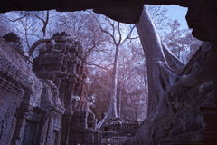 Ta prohm castle siem reap Cambodia Royalty Free Stock Images