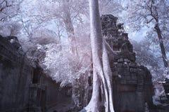 Ta prohm castle siem reap Cambodia Stock Photography