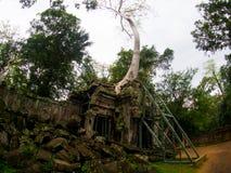 TA Prohm Castle, Angkor Wat, Καμπότζη Στοκ Φωτογραφίες